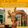 giraffe manor wtf fun fact