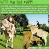 girl rides her pet cow wtf fun fact