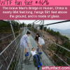 glass bridge in china wtf fun facts