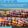 glass gem wtf fun fact