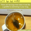 goldfish tea bags wtf fun facts