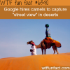 google uses camels to capture the desert wtf fun