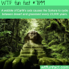 green sahara wtf fun facts