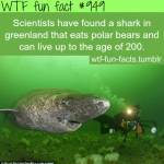greenlands shark