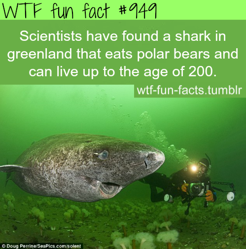 shark in *Greenland.