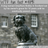greyfriars bobby lessons in loyalty from mans