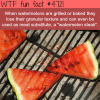 grilled watermelons wtf fun facts