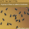group of flies wtf fun facts