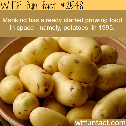 Growing food in space -WTF funfacts
