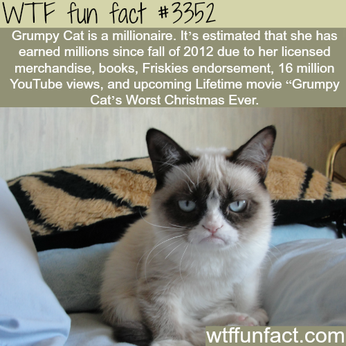 Grumpy cat is a millionaire -  WTF fun facts