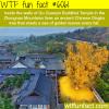 gu guanyin buddhist temple wtf fun facts