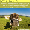 happy cows produce more milk wtf fun facts