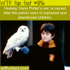 harry potter facts wtf fun facts