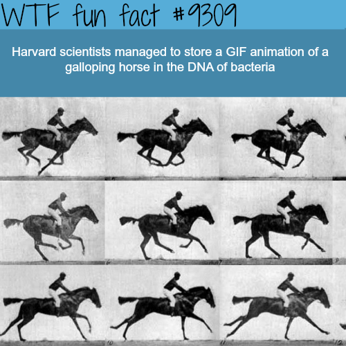 Harvard Scientist stored a GIF in a DNA - WTF Fun Fact