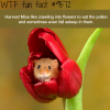 harvest mice wtf fun fact