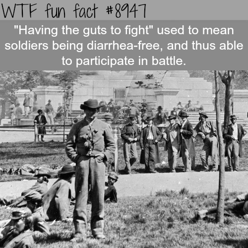 Having the guts to fight - WTF fun fact
