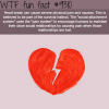 heart break wtf fun fact