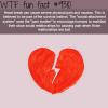 heart break wtf fun fact