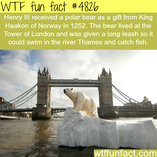 Henry III's polar bear - WTF fun facts