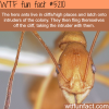 hero ants wtf fun facts