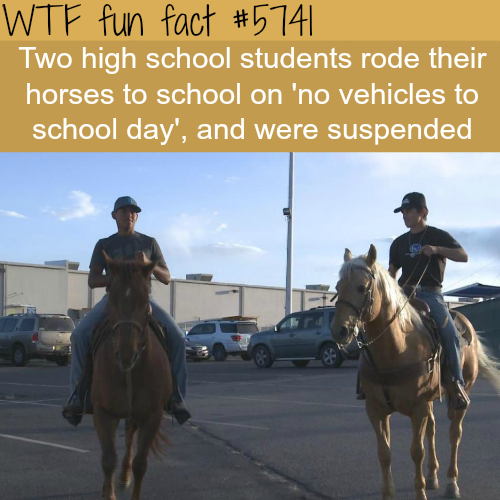 "High school students suspended after bringing their horses on ""no vehicles day"" - WTF fun facts"