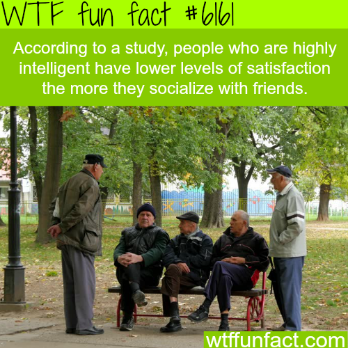 Highly intelligent people feel less satisfied… - WTF fun facts