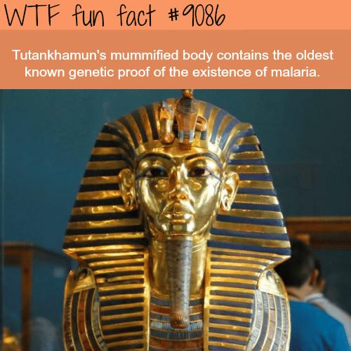 History - WTF fun fact