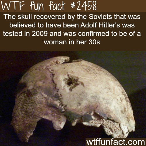 Hitler Skull -  WTF fun facts