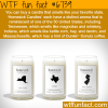 homesick candles wtf fun fact