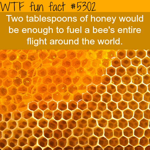 Honey - WTF fun facts