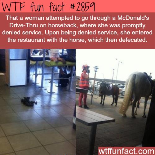 Horse drive thru in McDonald's -WTF fun facts