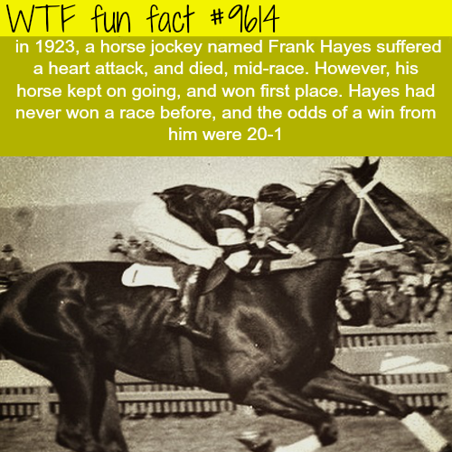 Horse jockey died mid-race - WTF fun fact
