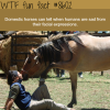 horses can tell if humans are sad wtf fun facts