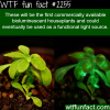 houseplants that glow