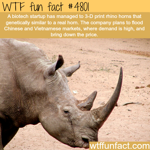 How a biotech startup is trying to save the rhinos - WTF fun facts