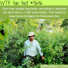 how a man created a whole forest by himself