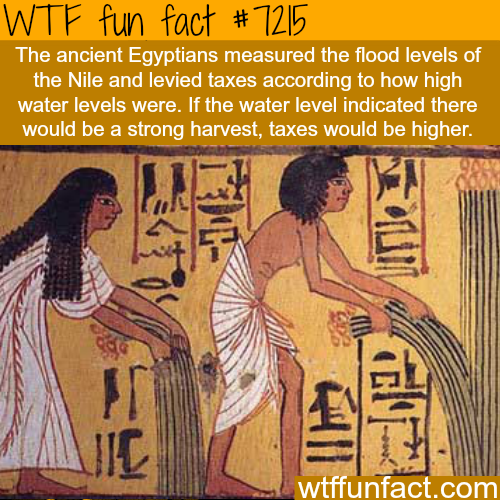 How ancient Egyptians measured taxes - WTF Fun Fact