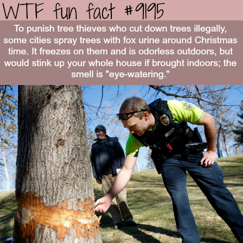 How cities are fighting tree thieves - WTF Fun Facts