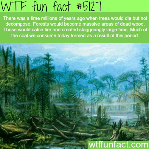 How coal was formed - WTF fun facts