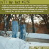how cold is it in minnesota wtf fun facts