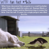 how dogs saved the fairy penguins wtf fun fact