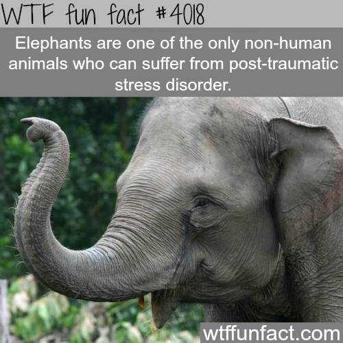 How elephants and humans are very alike - WTF fun facts