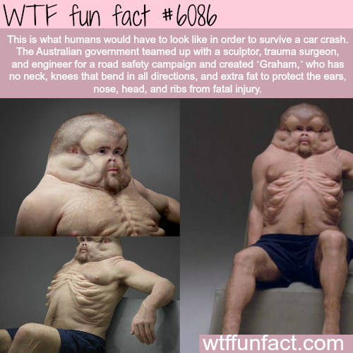 How humans should look like to survive a car crash - WTF fun facts