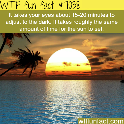 How long it takes a human eye to adjust to the dark - WTF fun facts