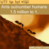 how many ants are there in the world wtf fun