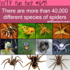 how many diffrent species of spiders are there