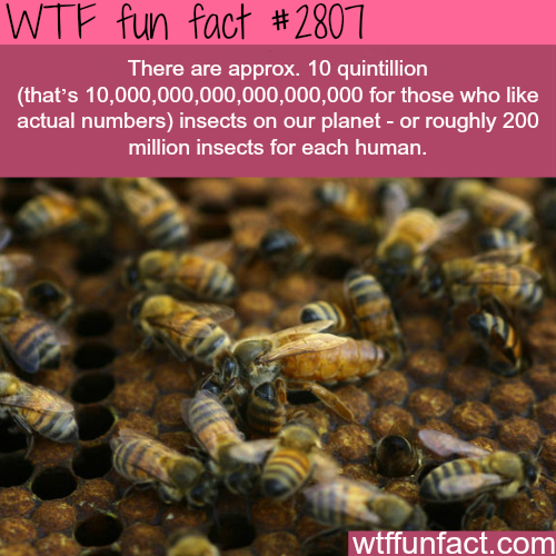 How many insects are there in the world -WTF fun facts