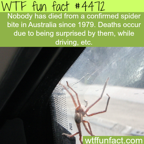 How many people died because of spider bite -   WTF fun facts
