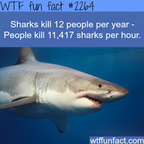 How many people do sharks kill every year? -WTF fun facts