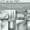 how many senses do humans have wtf fun fact